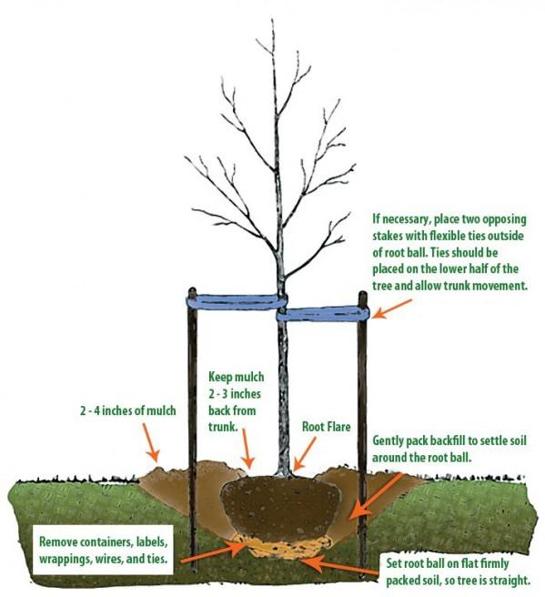 Tree Mulching Diagram