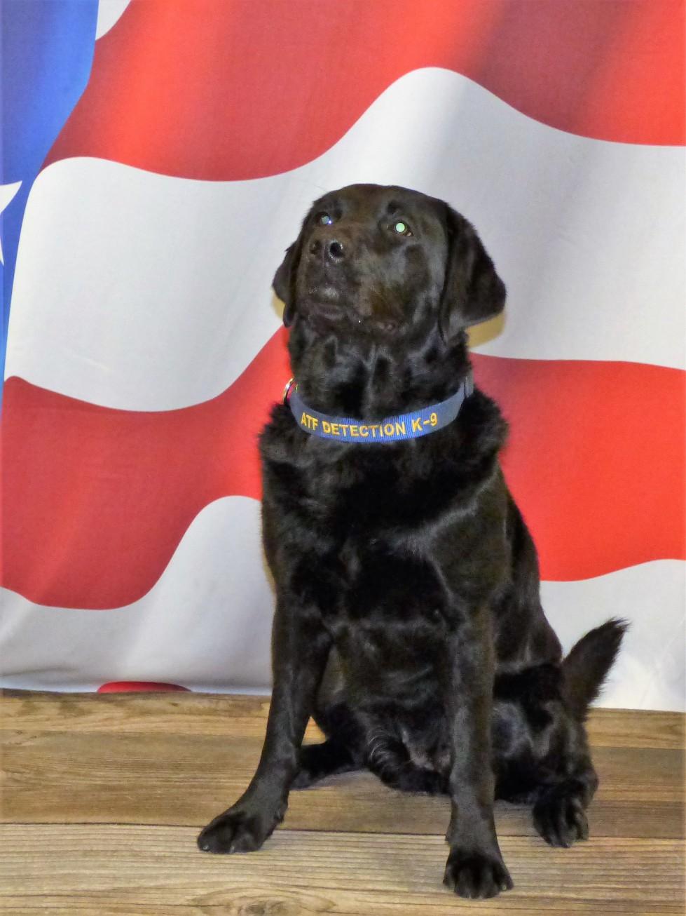 BGFD Fire Investigator Graduates from ATF Accelerant Detection Canine Handling School