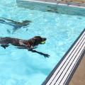 Puppy Paddle - RSA