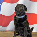 BGFD Fire Investigator Graduates from ATF Accelerant Detection Canine Handling School