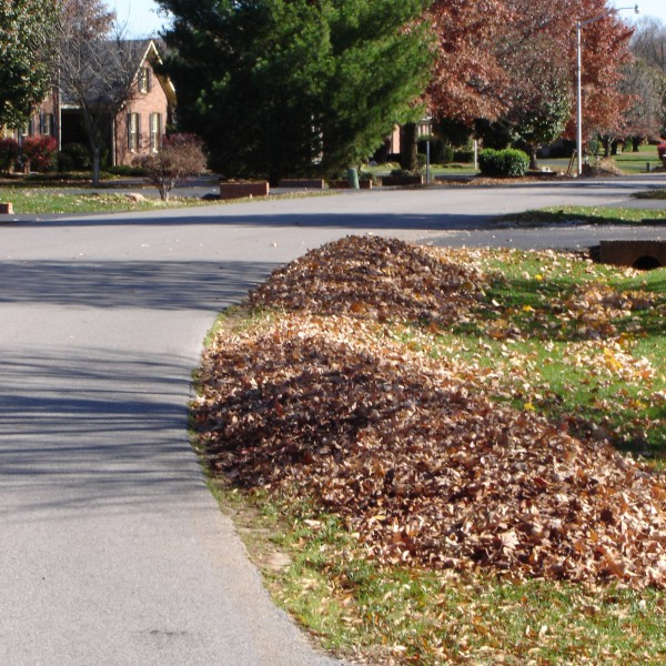 Right way to rake leaves