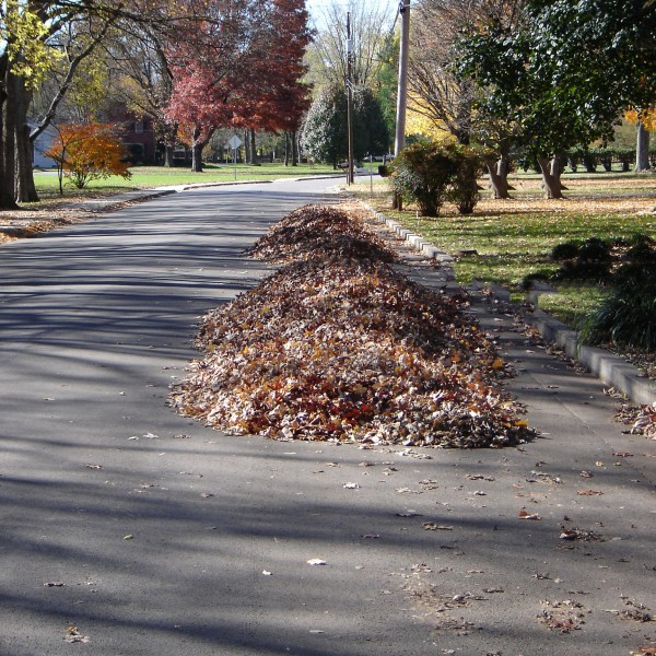 Wrong way to rake leaves