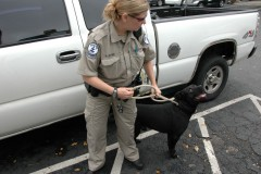 Animal Control Changes