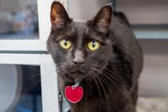 Meet Rasta! October Pet of the Month