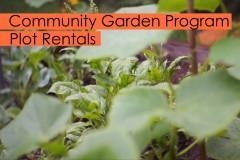 Garden Plot Rentals