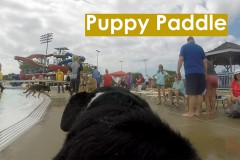 2017 Puppy Paddle