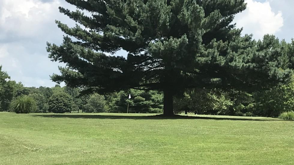 Golf - Banner Image #3