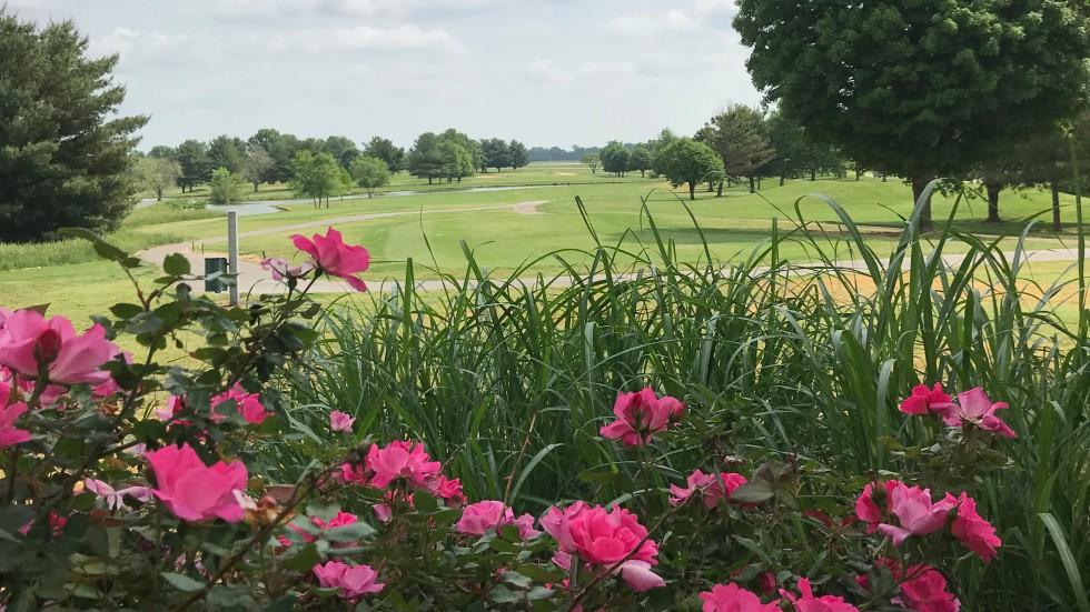 Golf - Banner Image #2