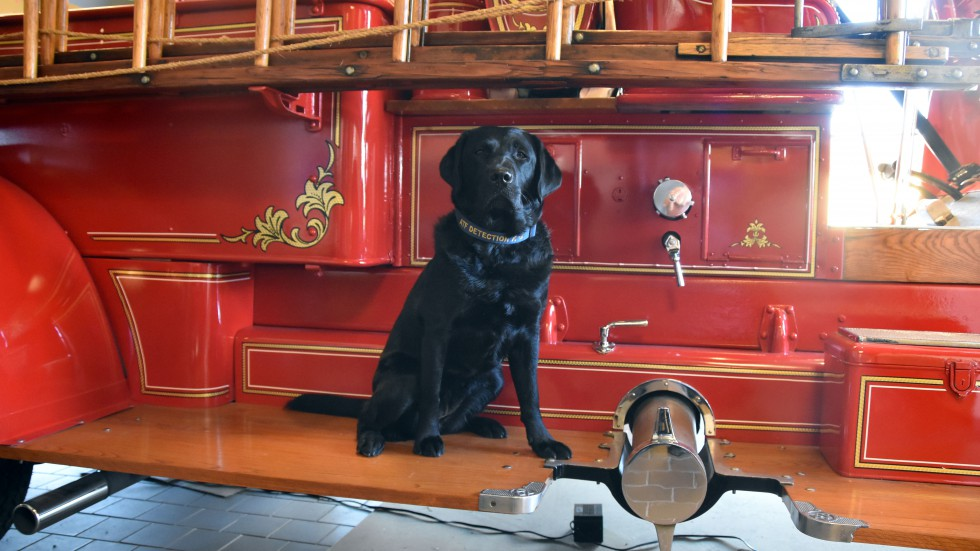 Millie - ATF Detection K9 - Bowling Green Fire Department